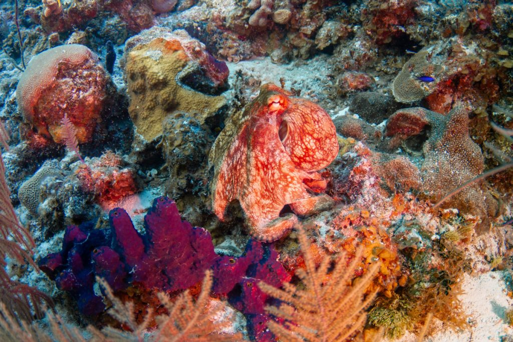 Coral in Caribbean